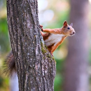 10 Ways That Squirrels Are Hurting Your Sales